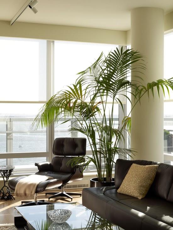palmeras de interior como regar para decoracion de salones modernos y minimalistas, sillon Eames diseño