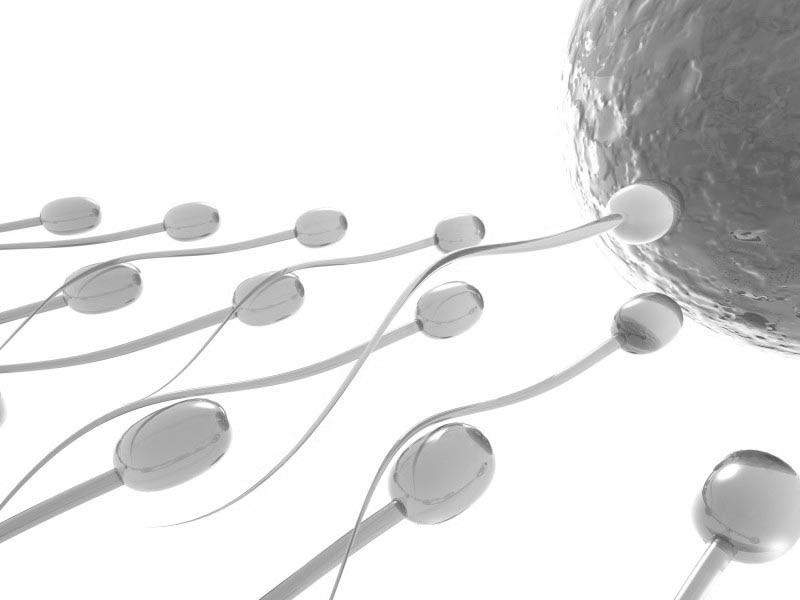 Pill men fertility male levels sperm hormone trials counts expect
