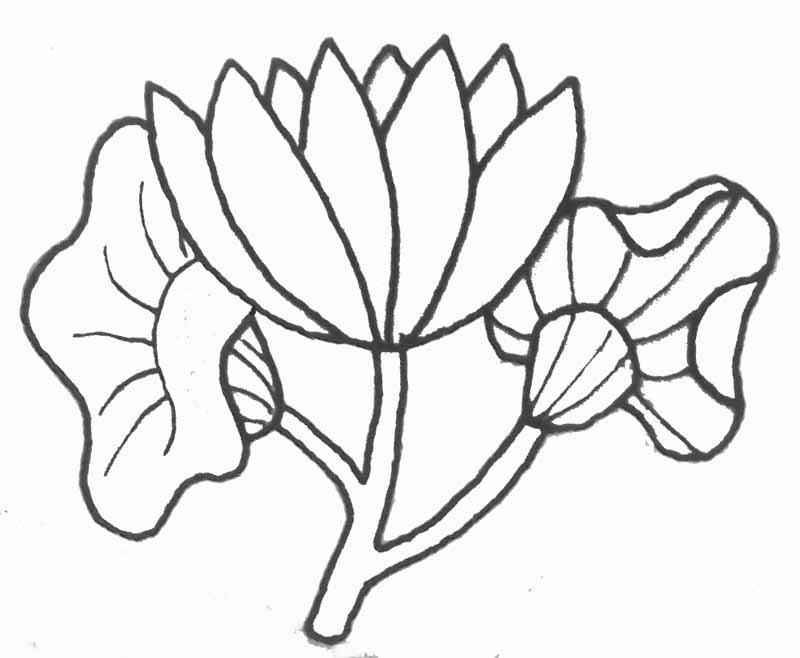 Coloriage Magique Addition Coloriage Fleur De Lotus
