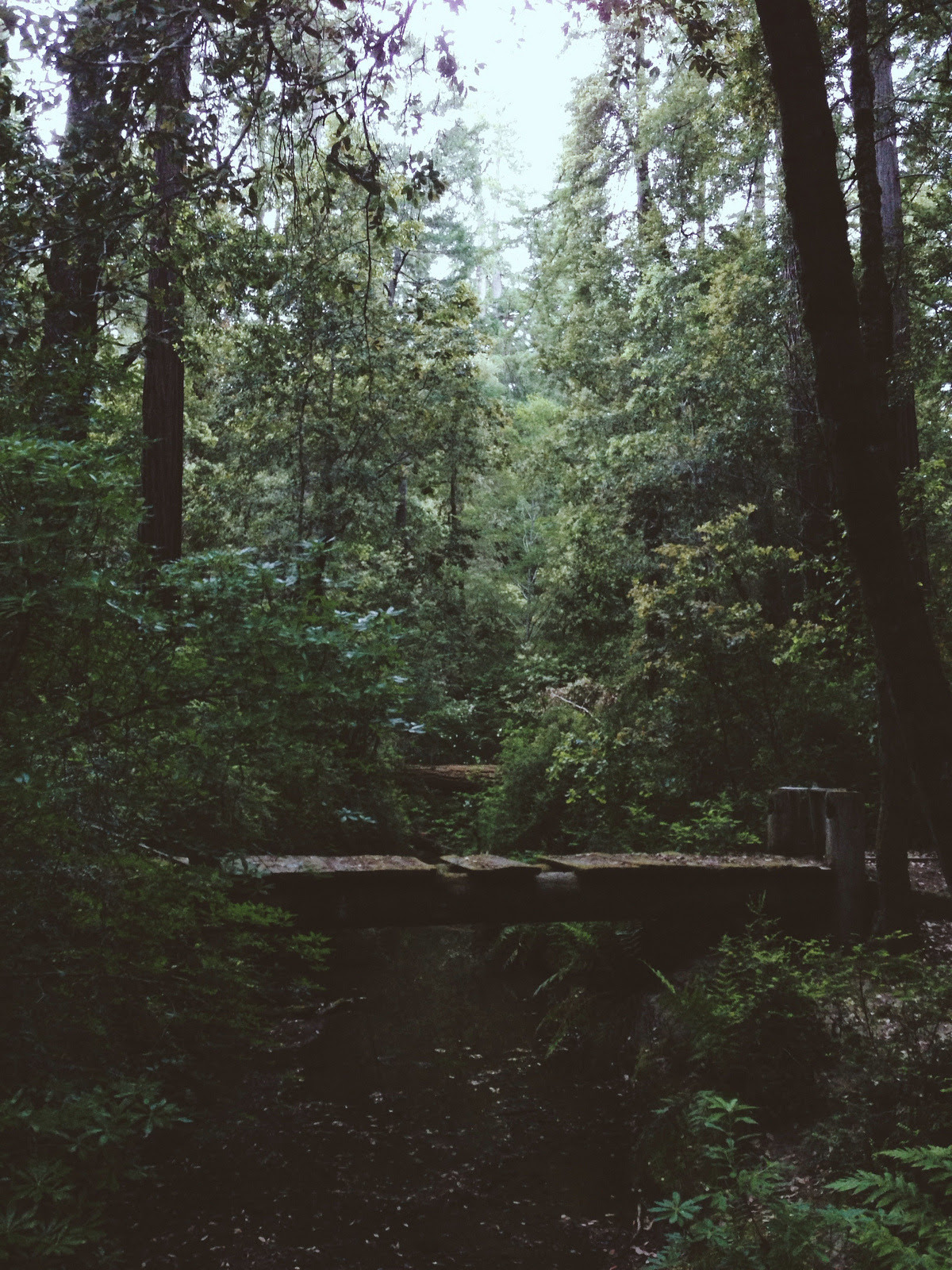 atraversso:  Beautiful  by Kevin Russ   The woods are mysterious. Who knows what lurks inside the dark shadows? Are there spirits or ghosts? Evil waiting to pounce on unsuspecting victims? Or maybe there's just beauty and warmth. And maybe a deer or two.