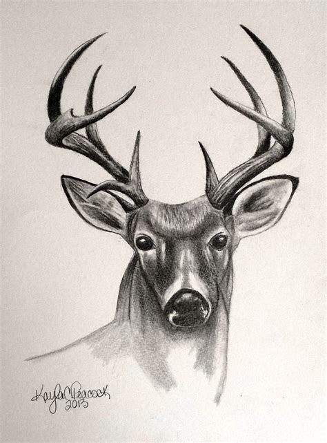 deer drawing sketchbook