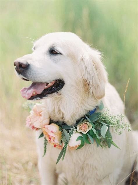 94 best Dogs in Weddings images on Pinterest   Wedding