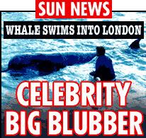 Whale Swims into London - The Sun headlines