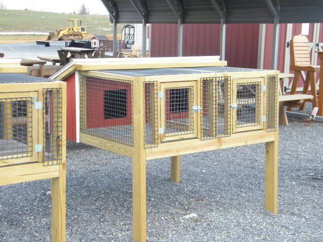 Learn Plans To Build A Pigeon Coop Coopy Co