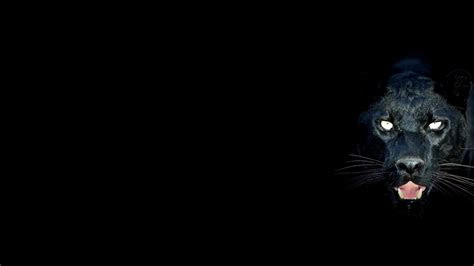 panther wallpapers  wallpapers