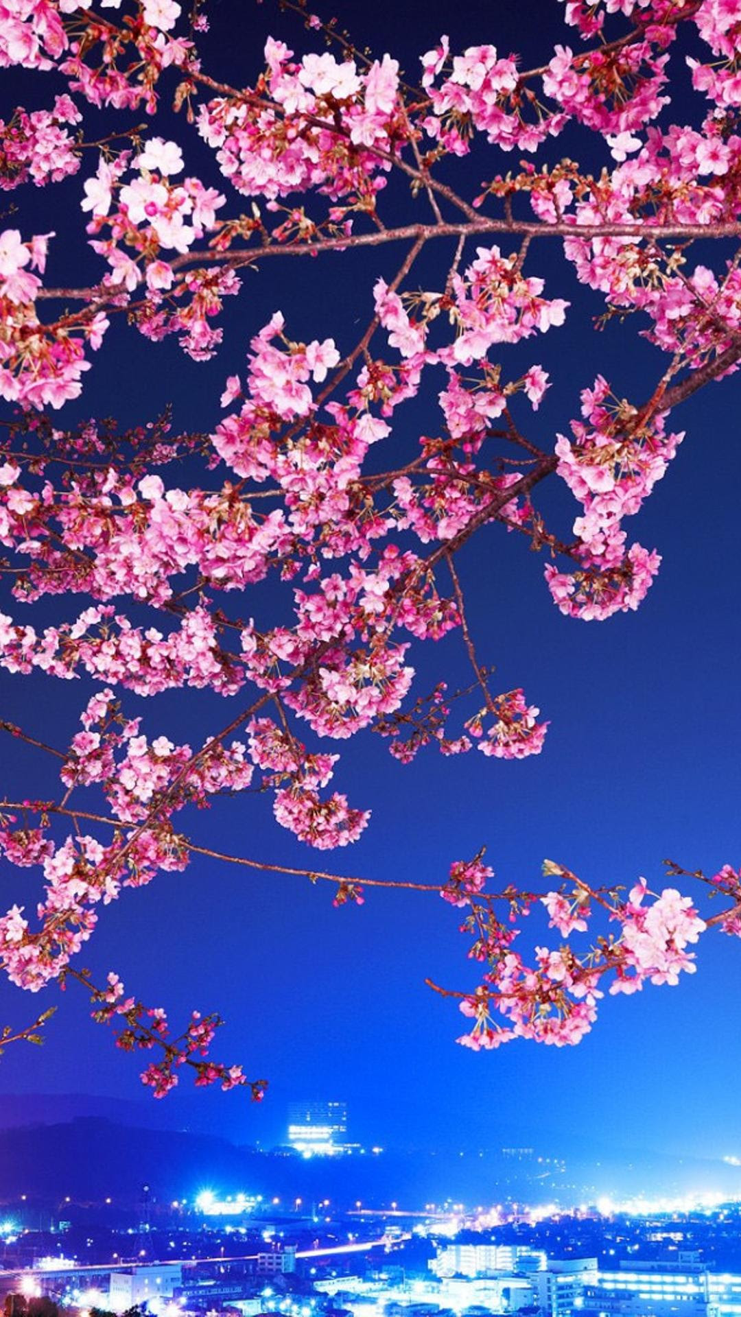 Pink flowers on branches - Cherry blossom Wallpaper ...