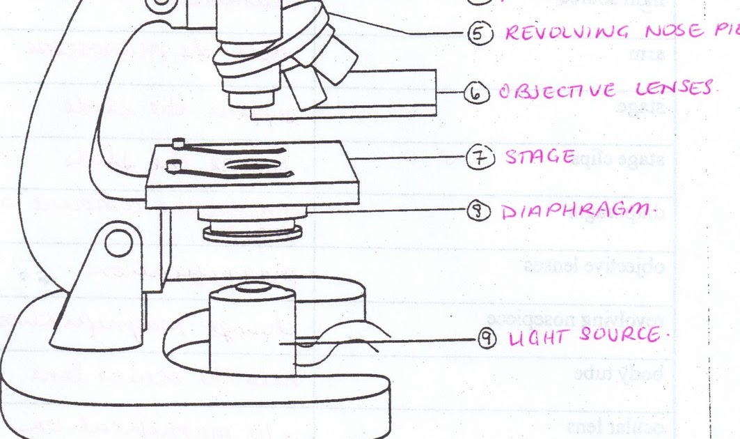 Labeled Diagram Of A Microscope