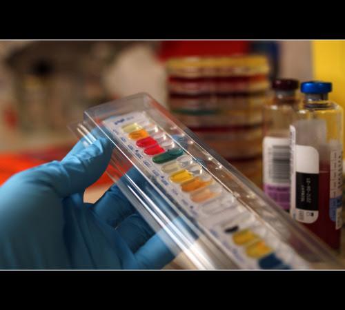 API Biocode Bacteria Strip