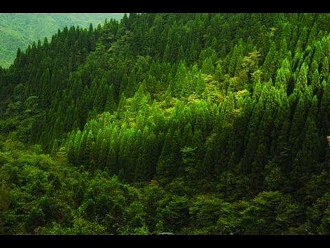 فيديو أكبر 10 غابات في العالم