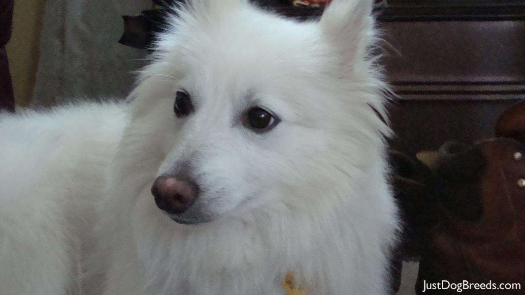Buddy (aka) Pogo - A