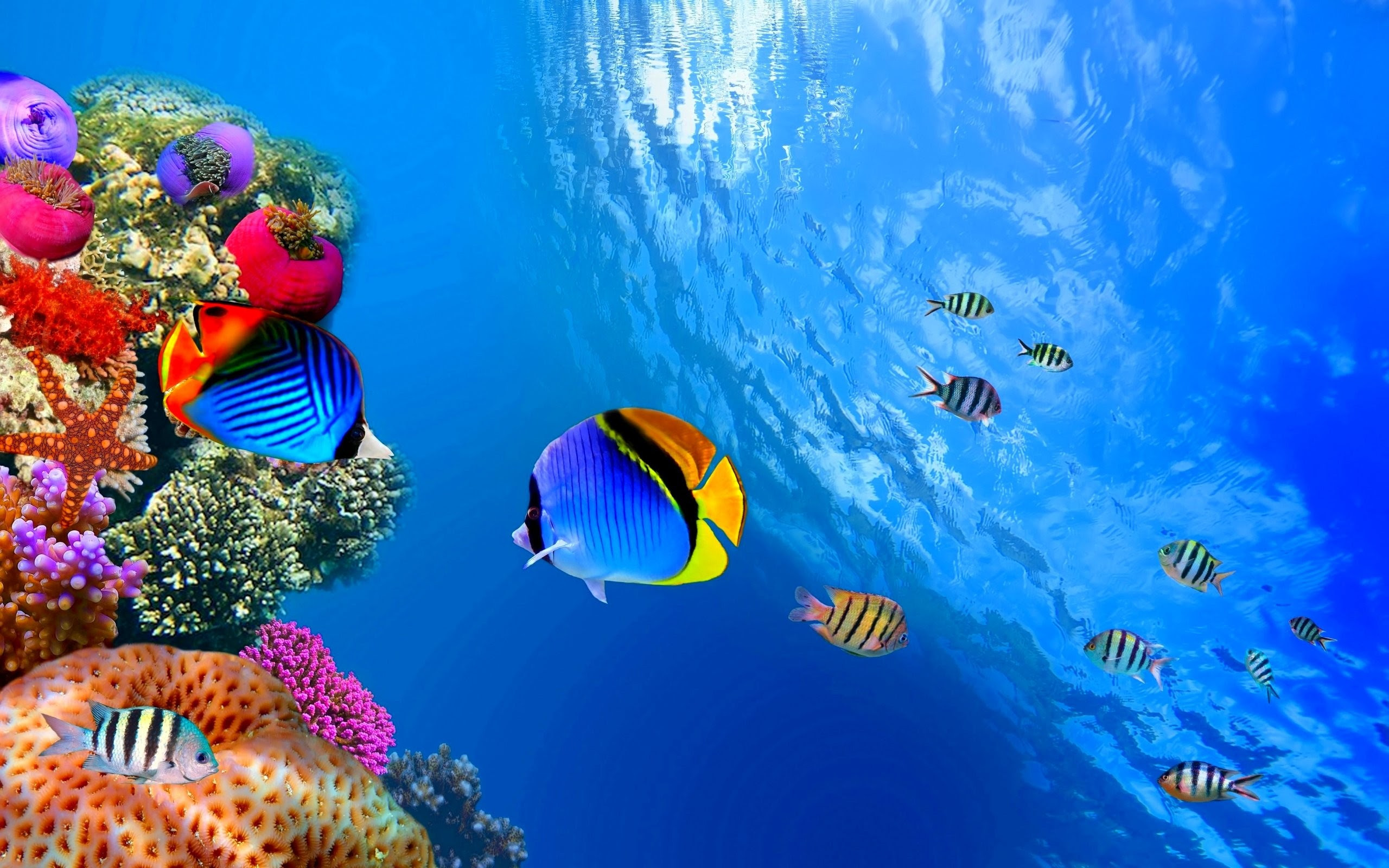 Sea Life Wallpaper 44 Images