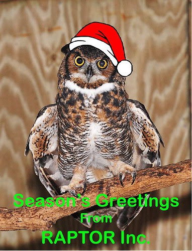 RAPTOR Christmas Greeting