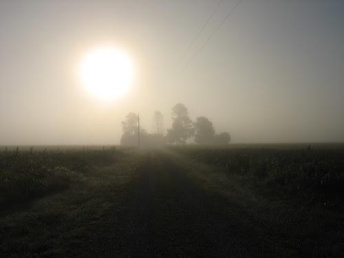 foggy nova