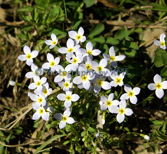 little white flowers in the spring