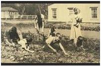 archival victory garden