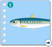 お魚図鑑 知る お魚図鑑カレンダー 小田原の魚小田原の魚ブランド