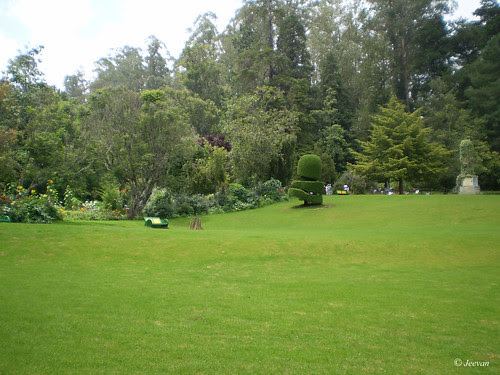 Green lawns of Ooty Botanical Garden