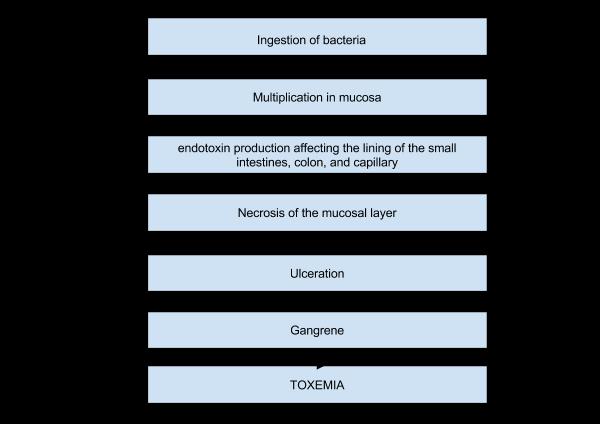 patho of amoebiasis