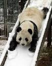 15 Pictures of Pandas Playing
