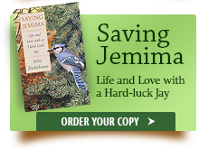 Saving Jemima. Click to Order