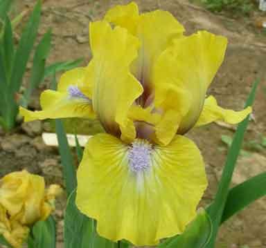 http://wiki.irises.org/pub/Sdb/SdbTuscanna/tuscana-jb.jpg