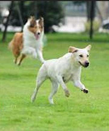 dog friendly hamptons