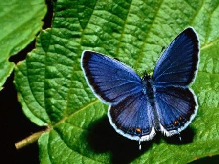 Dónde Viven Las Mariposas Mariposapedia