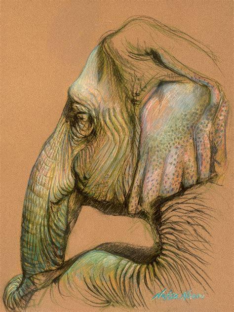 elephants drawings images  pinterest animal