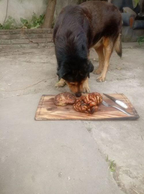 La emotiva despedida a Rocko, el famoso perro que celebró sus 15 años con un delicioso asado