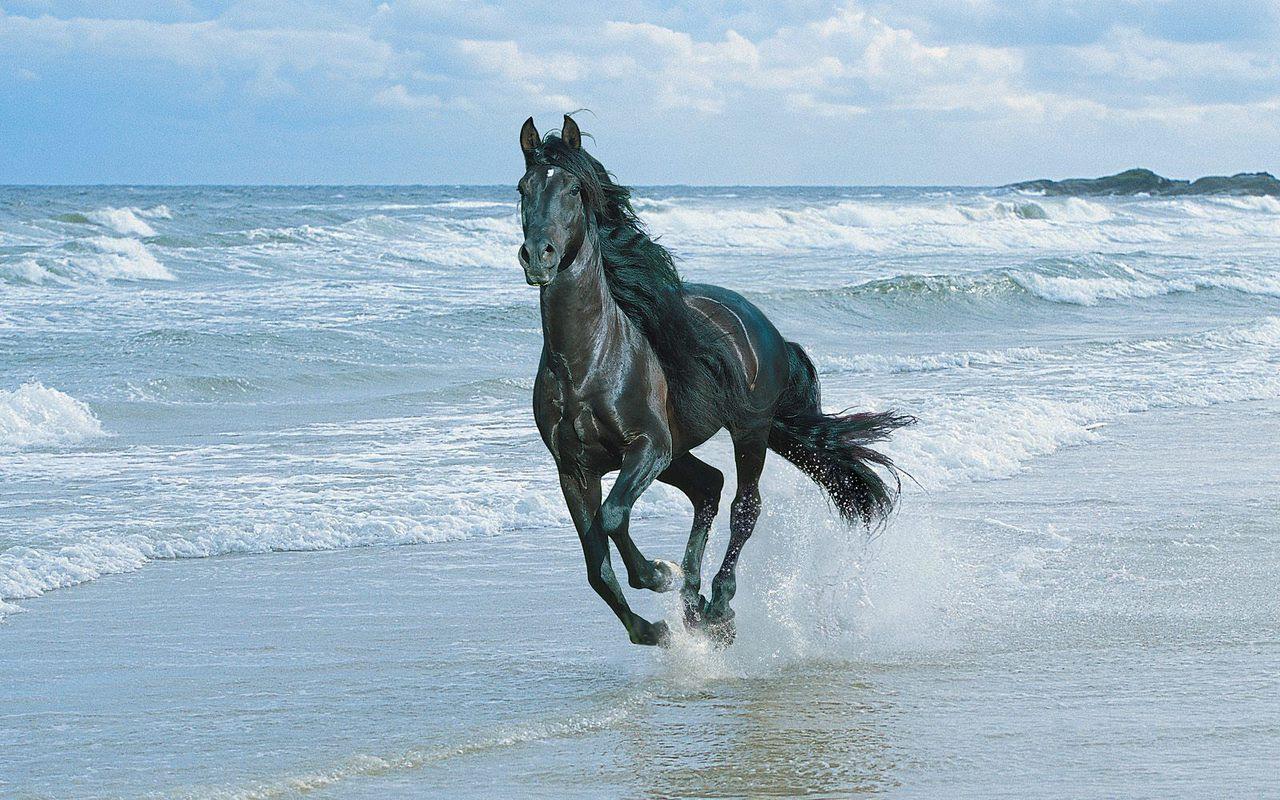 Beautiful Horses Wallpapers New Wallpapers
