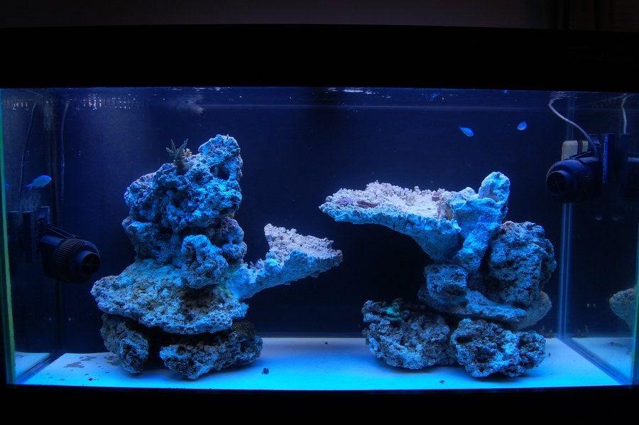 Reef Aquascaping Tips - Aquascape Ideas