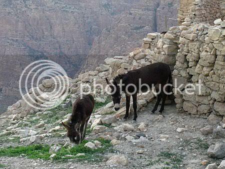 Dana Donkeys