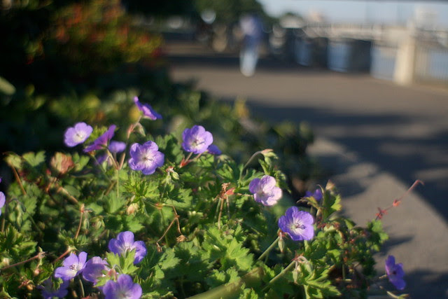 waterfront flowers