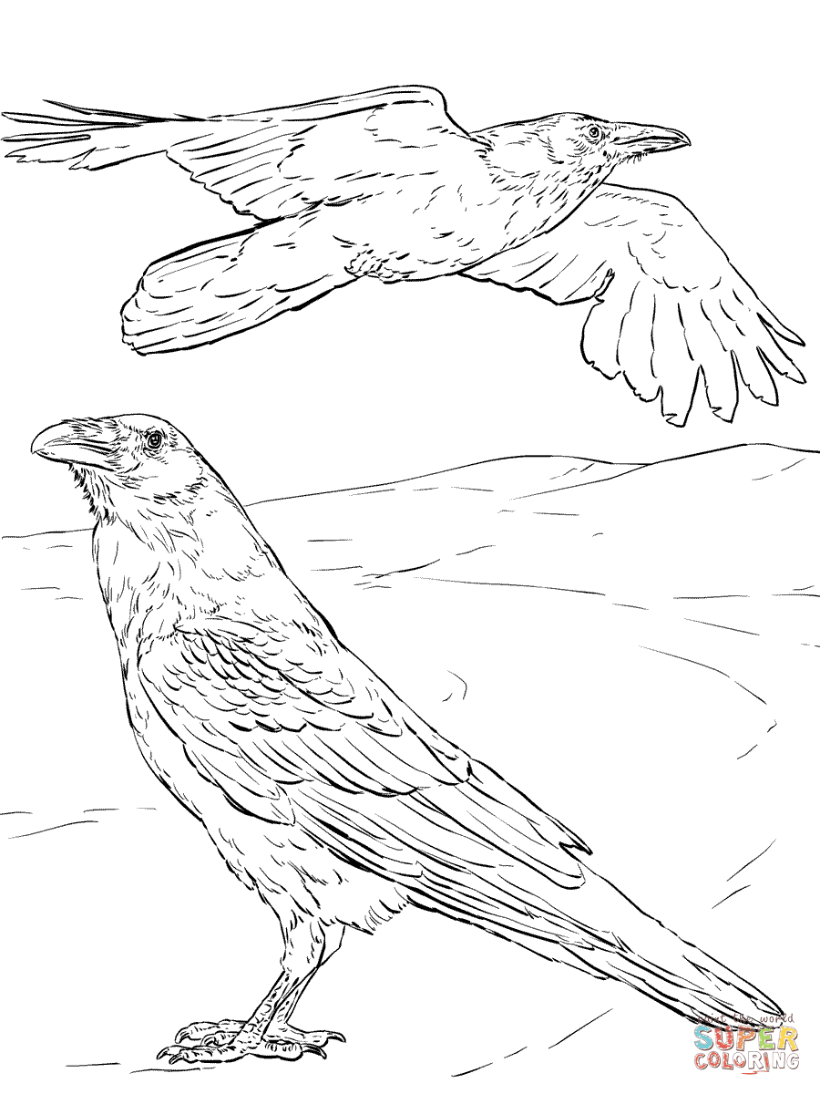 common raven coloring pages