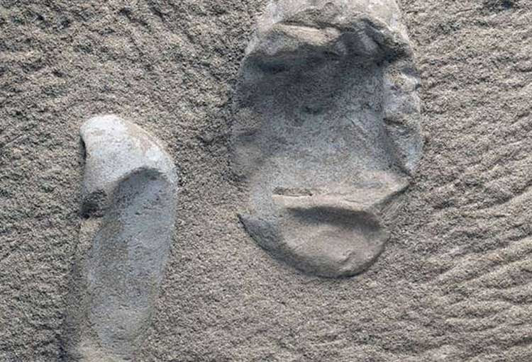 πτερόσαυροι