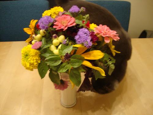 buddy likes princeton farmer's mkt flowers