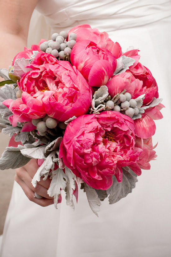 Stunning deep pink coral charm peonies bridal bouquet along with dusty miller and silver brunia. Designed by Holly Chapple