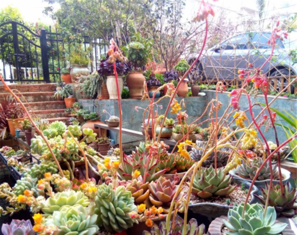 大神家的多肉花园 美到每一张图片都可以做你的手机壁纸 花园 大神