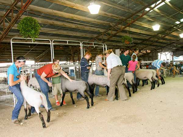 Image result for Kankakee County Fair 2017