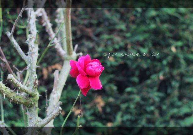 photo autumn17_zps81b5428e.jpg