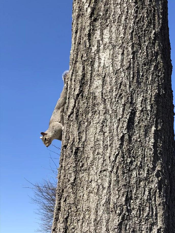 Squirrel at the campus