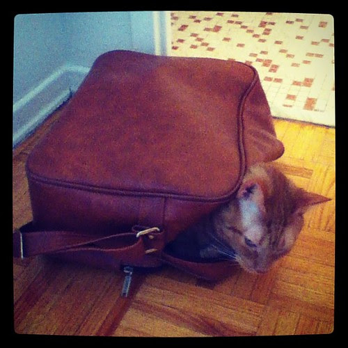Someone has packed himself to come on the road trip with us today. #gingerkitty