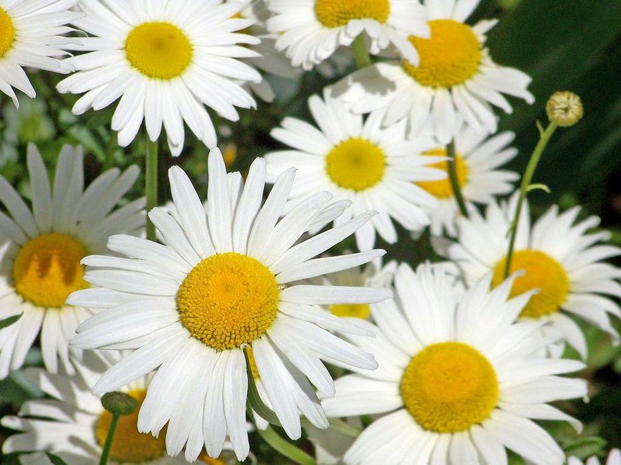 Las Flores Y Su Significado Plantas