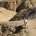 israel2012-desert-4