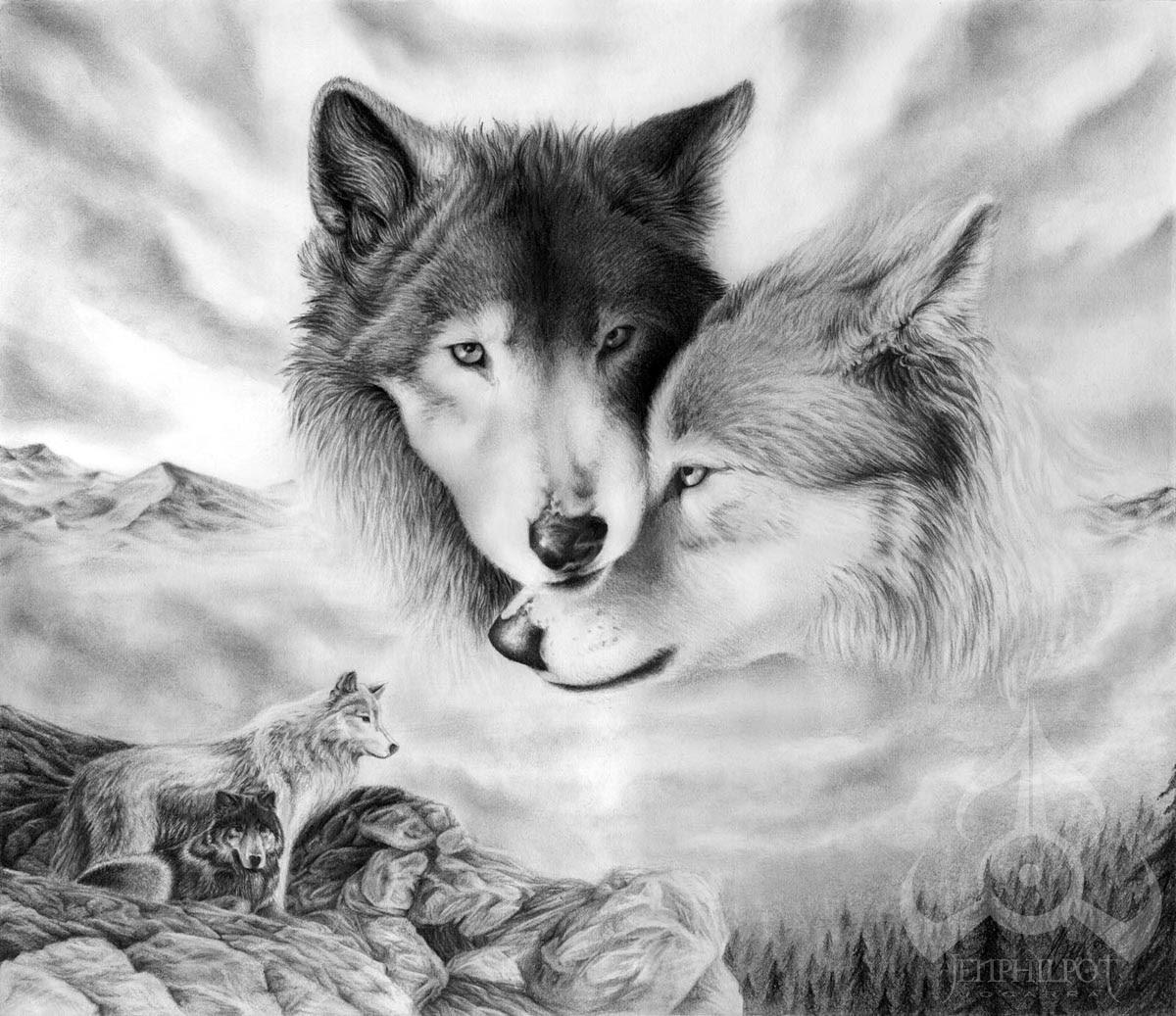 Imagenes De Lobos Imágenes En Taringa