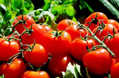 <p>La investigación apunta que los compuestos de tomates rojos y lisos son más activos en la prevención del cáncer colorrectal. / Fundación Descubre</p>