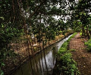Il fossato dove il tenente Calley ha ordinato l'uccisione di decine di civili.
