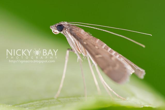 Moth - DSC_8421