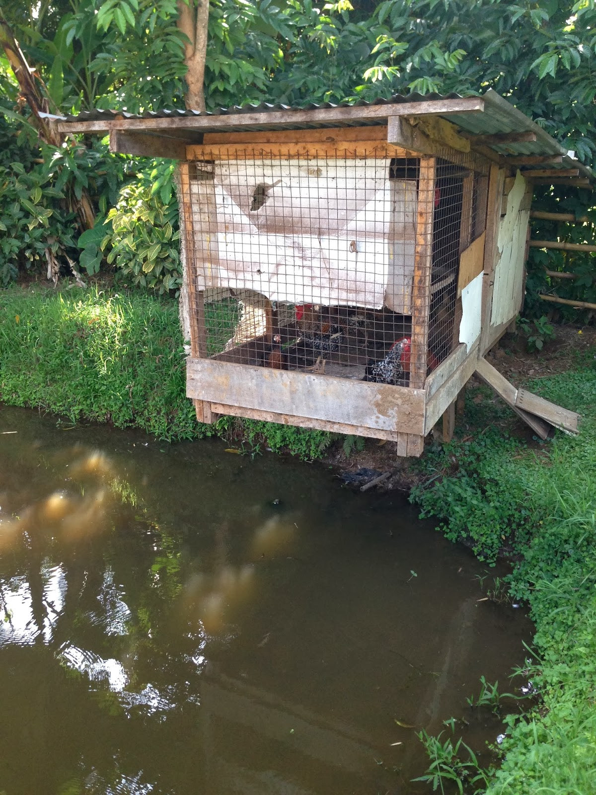 Chicken Coops That Work 5 Brilliant Ways Abundant Permaculture