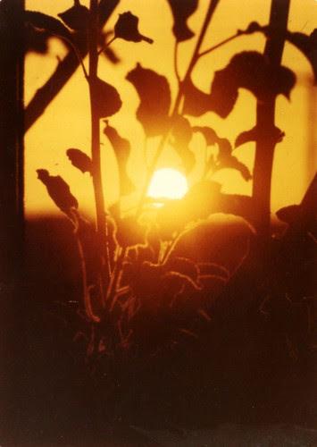 Sunrise, c. 1973